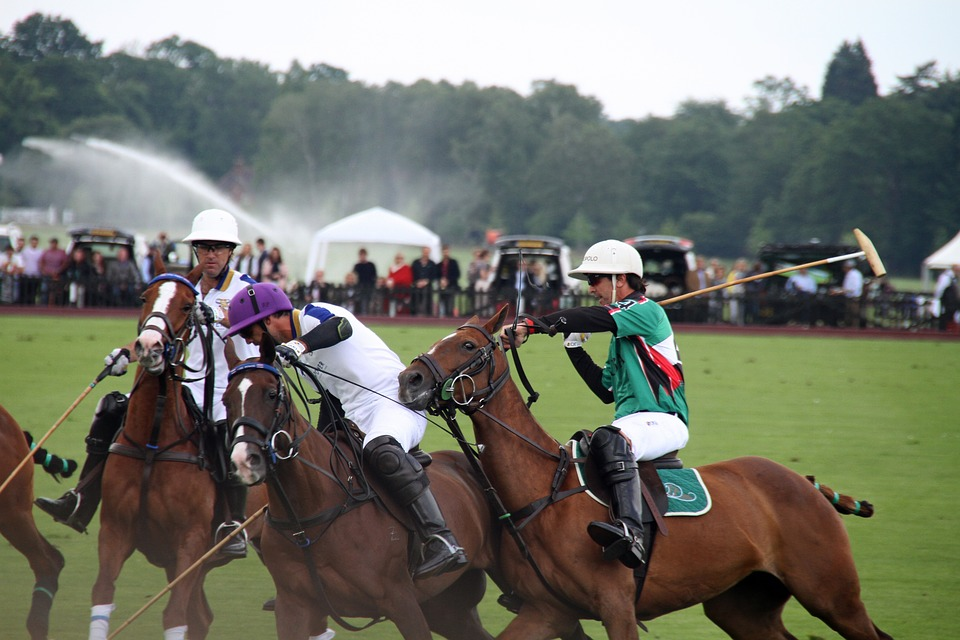 Polo, Horses, Players, Equestrian, Sport, Competition