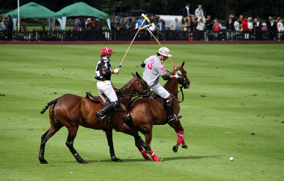 Polo, Competition, Horses, Players