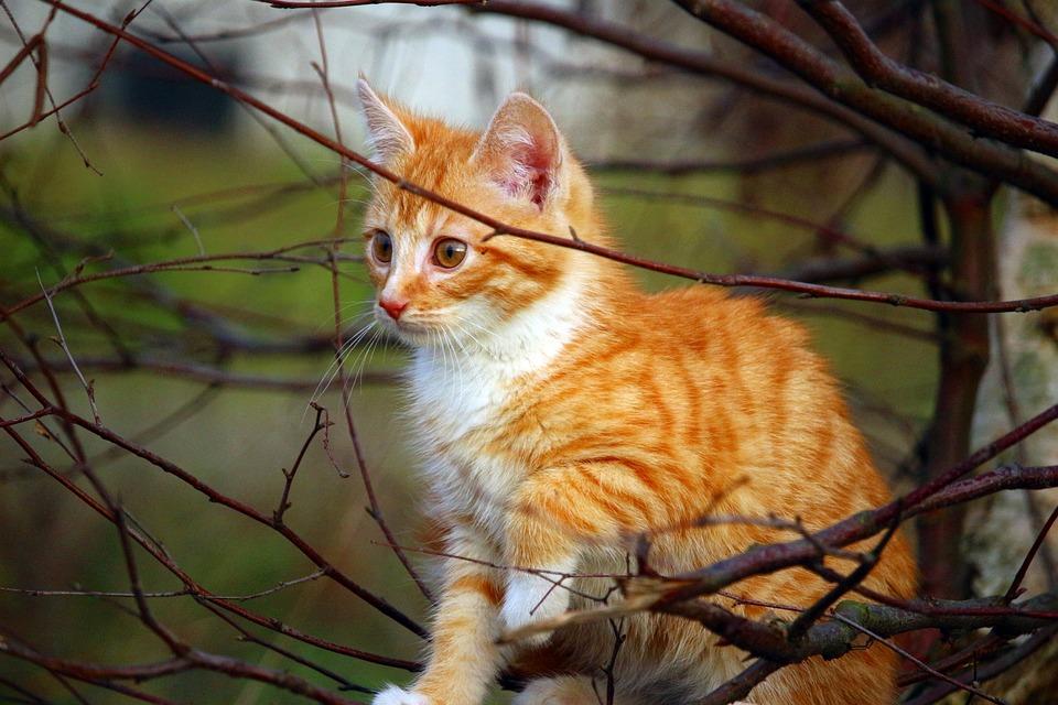 Cat, Kitten, Cat Baby, Playful, Mackerel, Autumn