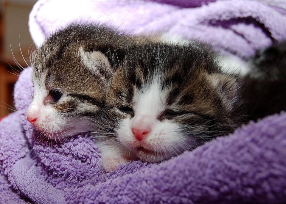 Cat, Young Cat, Playful, Pet, Black Cat, Cat Face, Head