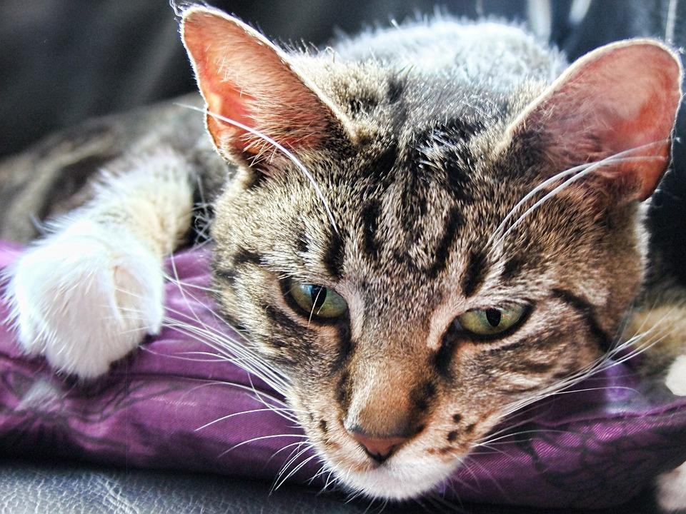 Cat, Feline, Pet, Playful, Portrait, Friendship