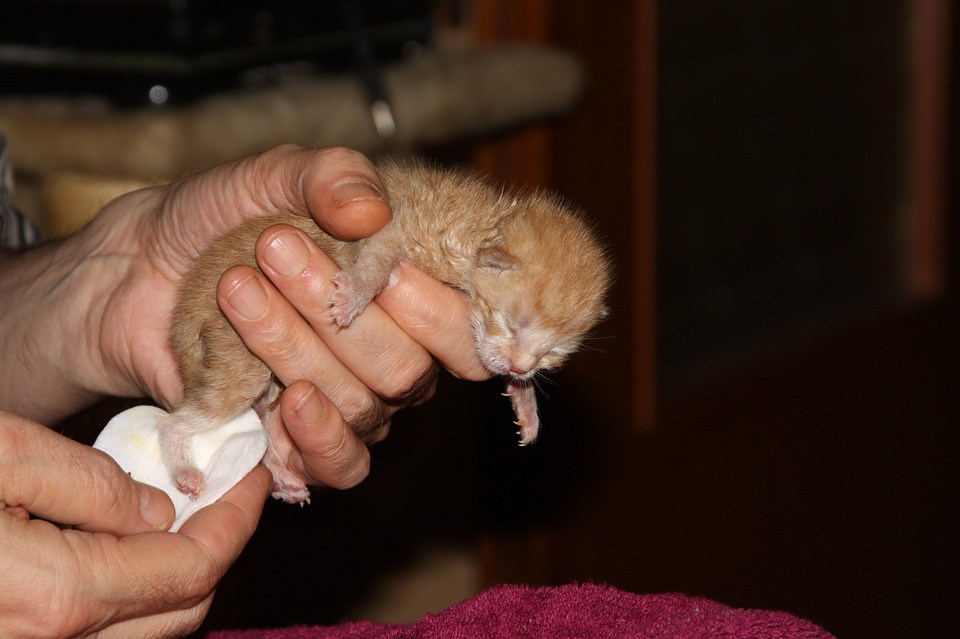 Cat, Puppy, Young Cat, Pet, Playful, Hand Rearing