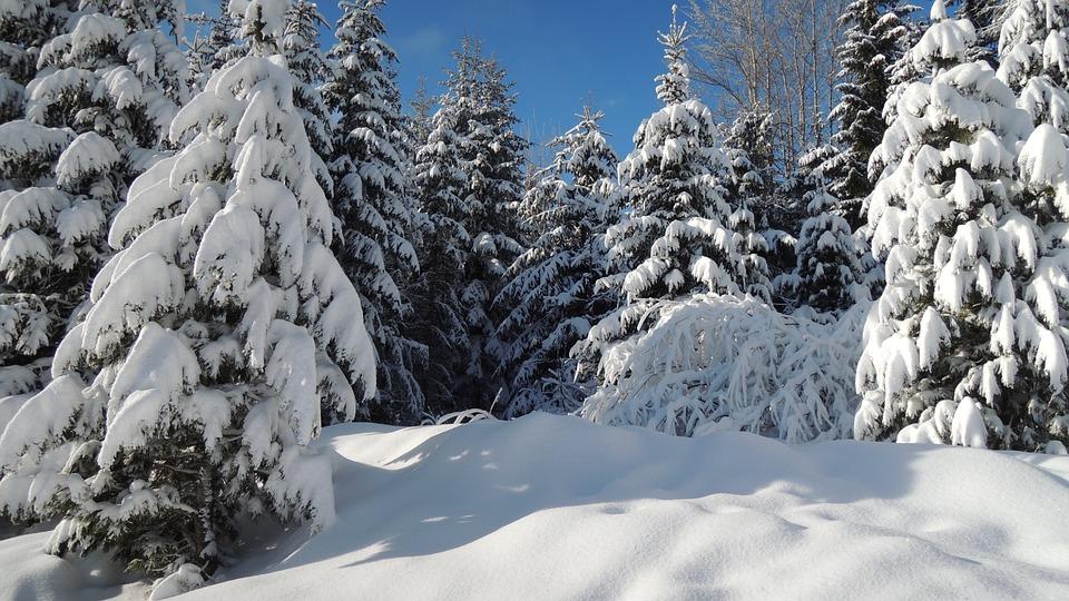 Slovakia, High Tatras, Pleso, Winter, Snow, Frost