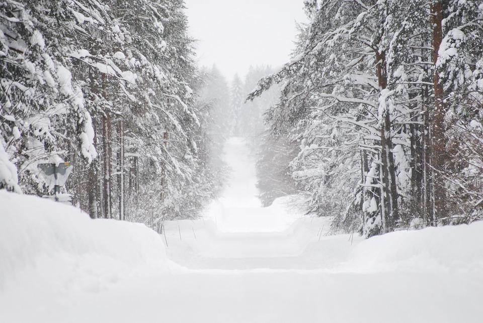Winter, Snow, Plow Dykes, Tree, Sweden