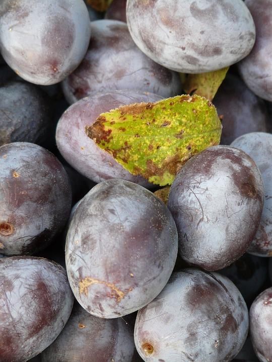 Real Plum, Plum, Prunus Domestica, Blue, Fruit, Eat