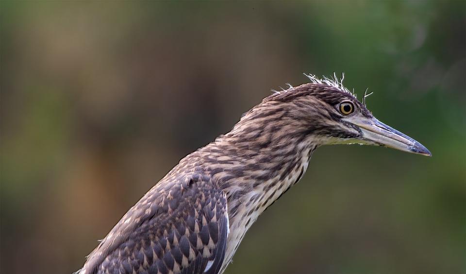 Bird, Animal, Feathers, Plumage, Beak, Bill