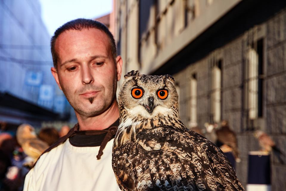 Owl, Bird, Bird Of Prey, Animal, Eyes, Plumage, Feather
