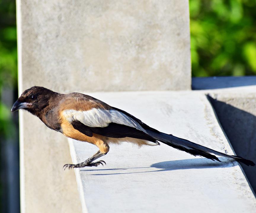 Bird, Sitting, Nature, Animal, Plumage, Robin, Songbird