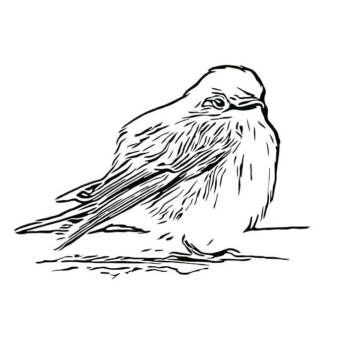 Bird, Sparrow, Icon, Outline, Animal, Wildlife, Plumage
