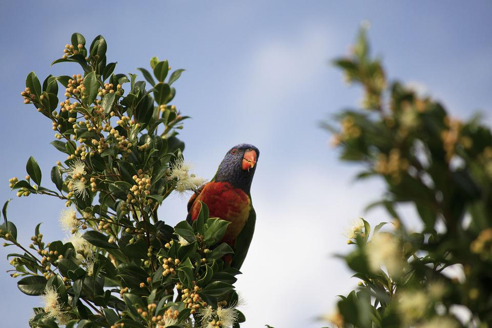 Bird, Parrot, Colorful, Nature, Exotic, Plumage