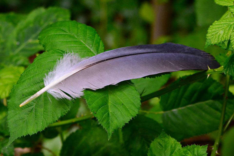 Feather, Bird, Plumage, Leaves, Foliage