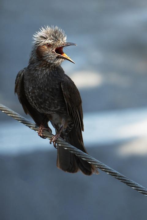Bird, Beak, Perched, Perched Bird, Feathers, Plumage