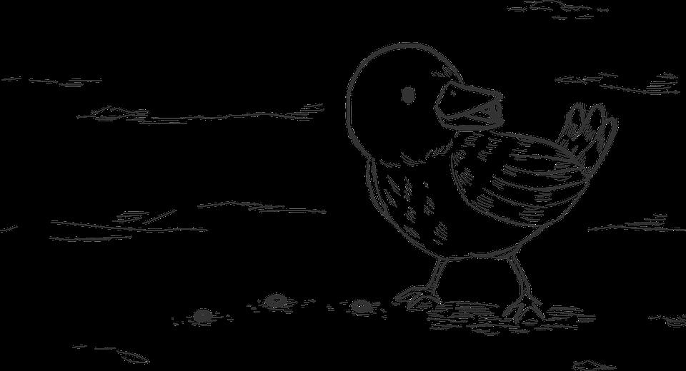 Bird, Feathers, Plumage, Seeds, Drawing, Gospel, Bible