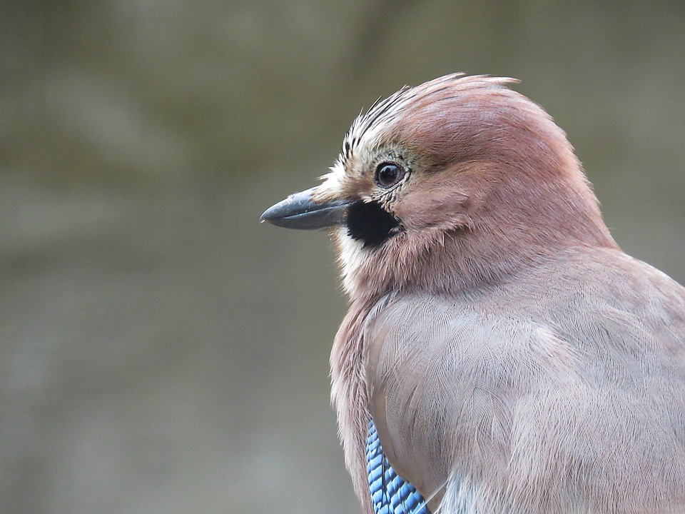Bird, Animal, Nature, Plumage