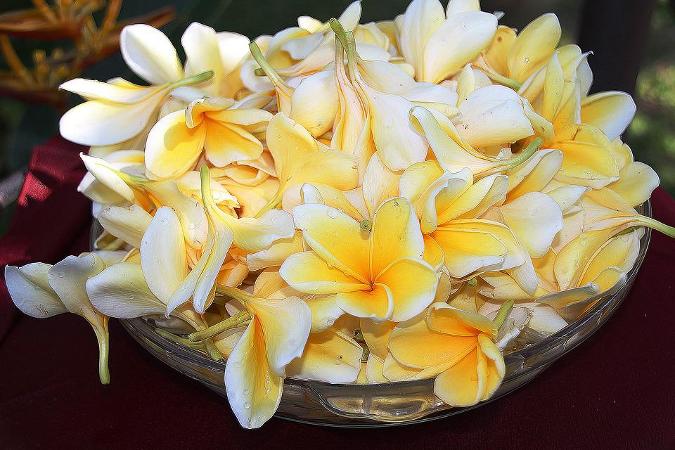 Plumeria, Flower, Yellow, Light, Colors, Flowers