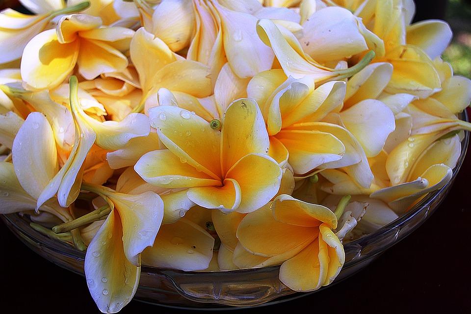 Plumeria, Flower, Yellow, Light, Colors, Flowers