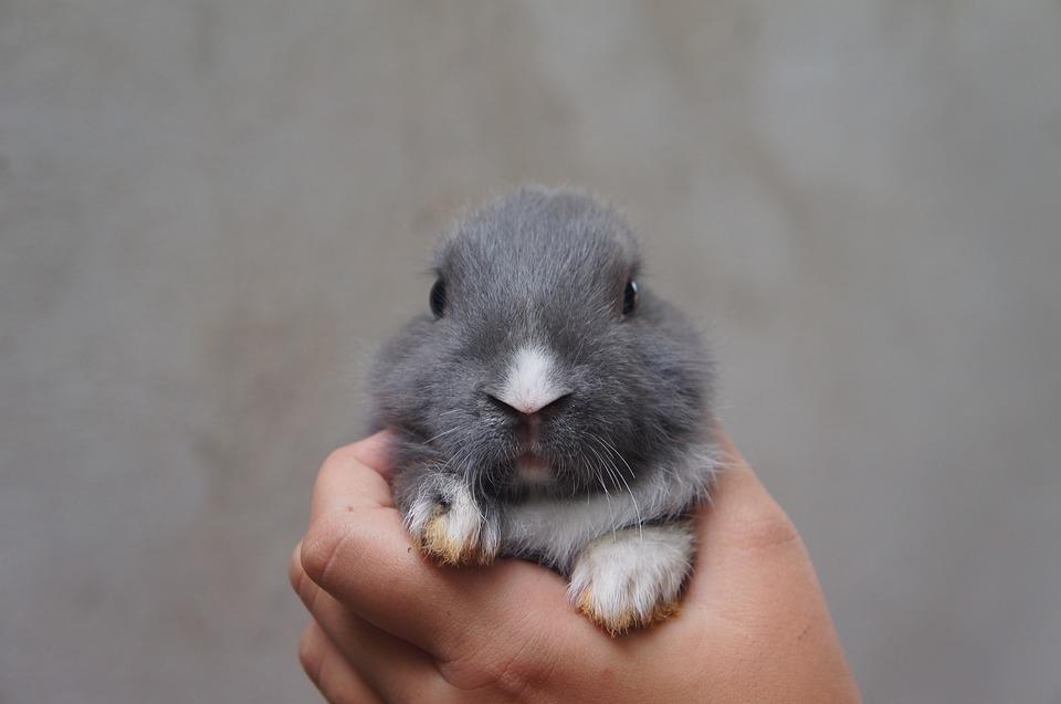 Rabbit, Cute, Plush