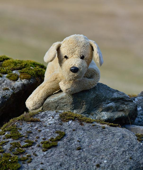 Plush Dog, Stuffed Animal, Teddy Bear, Soft Toy, Dog