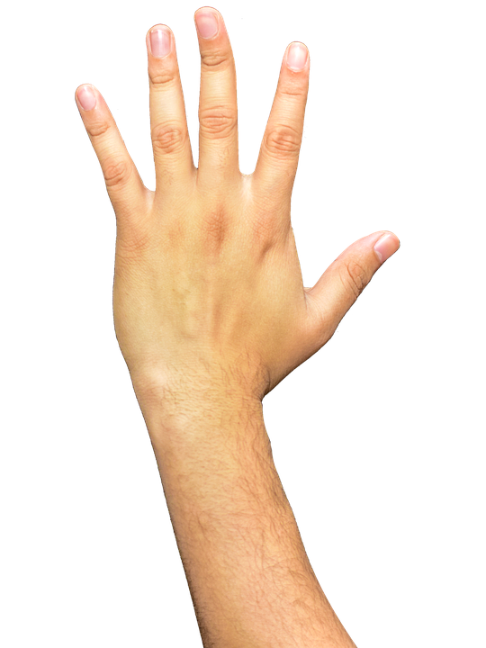 Hands, Fingers, Arm, Png