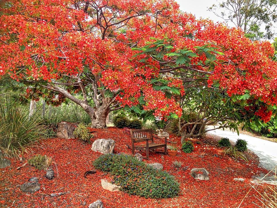 Blossom, Red, Poinciana, Spring Flower, Bloom, Flora
