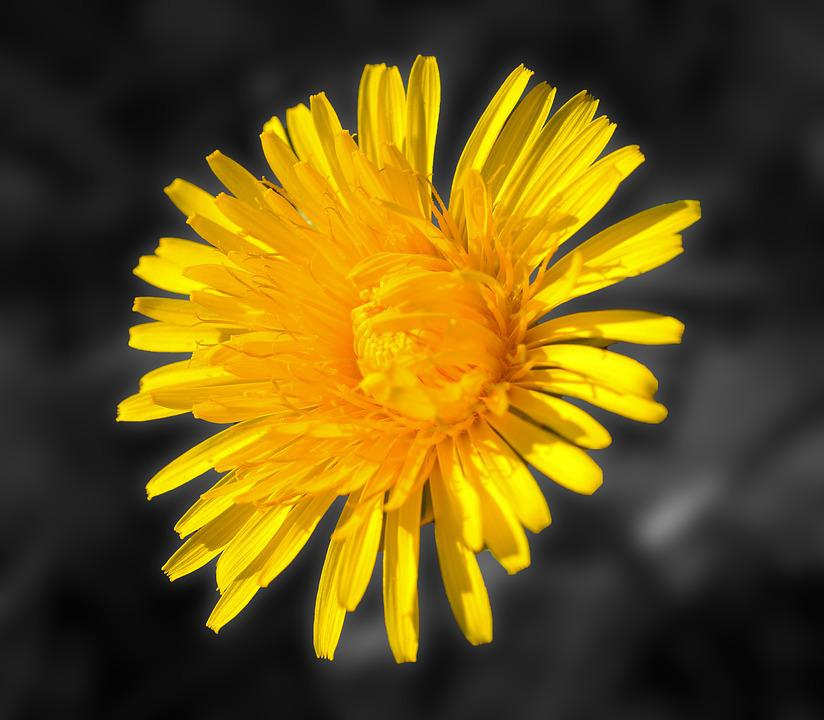 Dandelion, Blossom, Bloom, Yellow, Pointed Flower