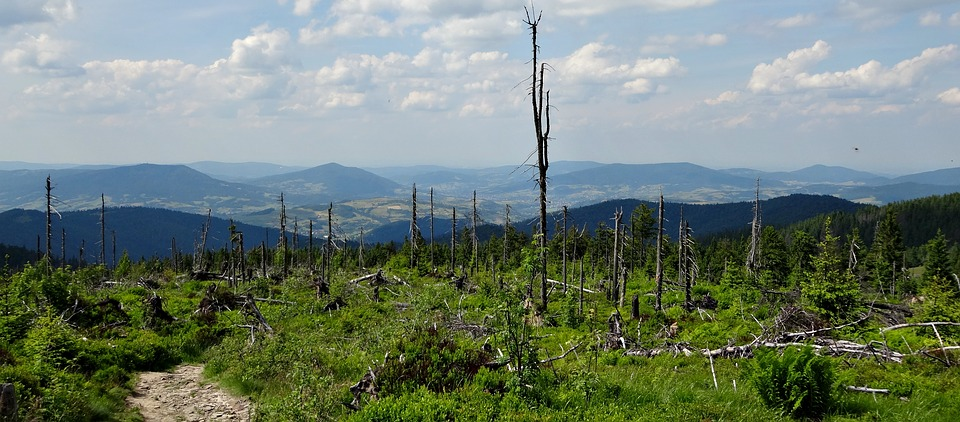 Mountains, Hot, Hiking Trail, Nature, Turbacz, Poland