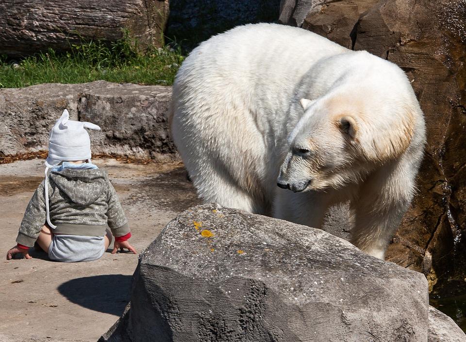 Fant bears