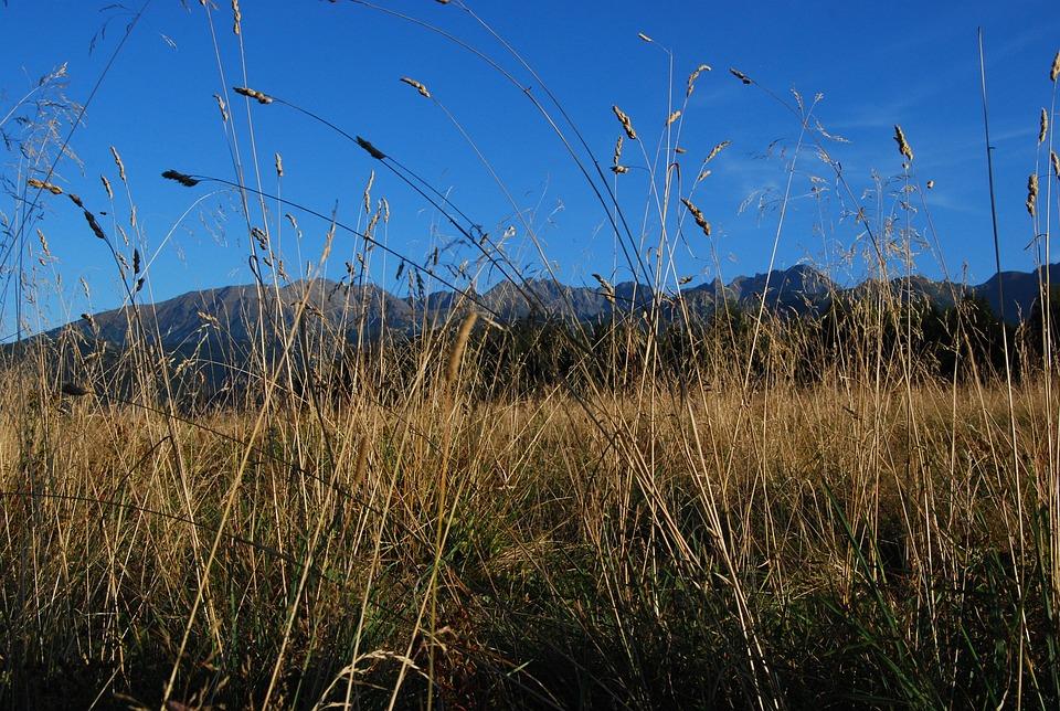 Tatry, Mountains, View, Podhale, Grass, Polish Tatras