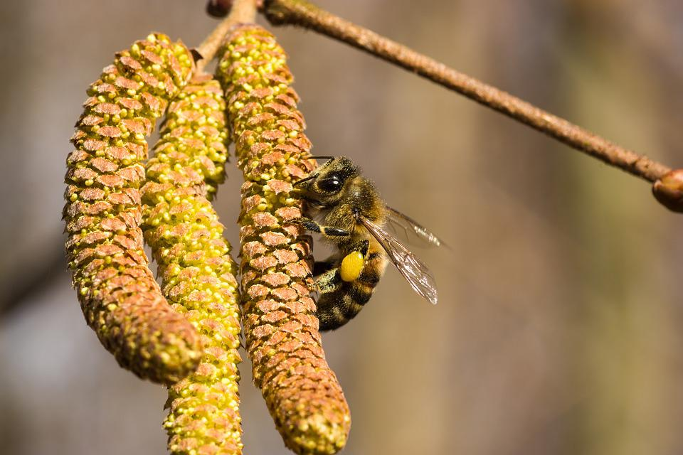 Nature, Tree, Plant, Insect, Close, Pollen, Bee