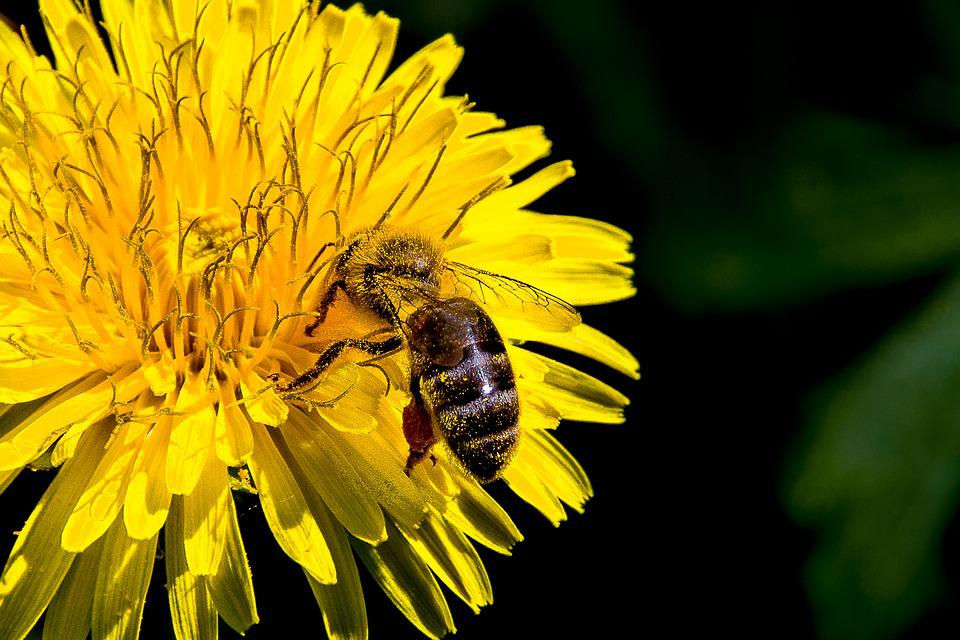 Nature, Bee, Insect, Flower, Pollen, Pollination