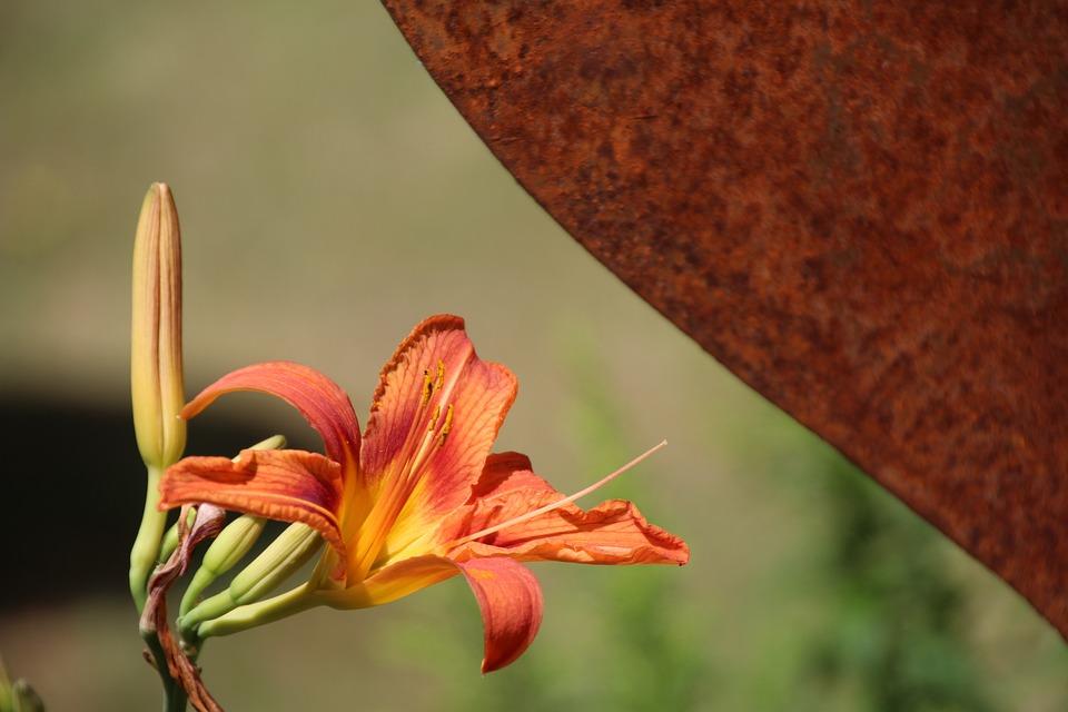Lily, Pollen, Orange, Blossom, Bloom, Orange Blossom