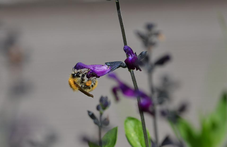 Insect, Pollen, Flower, Nature
