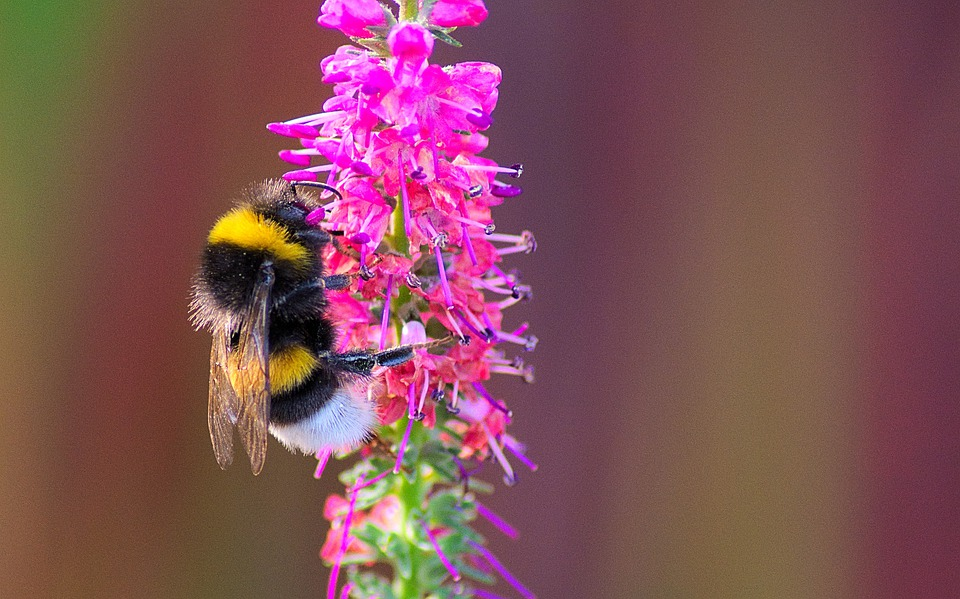 Bee, Insect, Animal, Flower, Bud, Nectar, Pollen