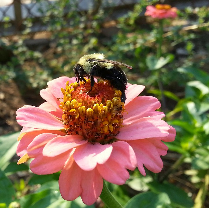 Nature, Insect, Flower, Pollen, Flora, Bee, Garden