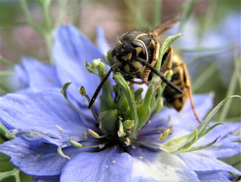 Nature, Flower, Bee, Insect, Pollen, Pollination