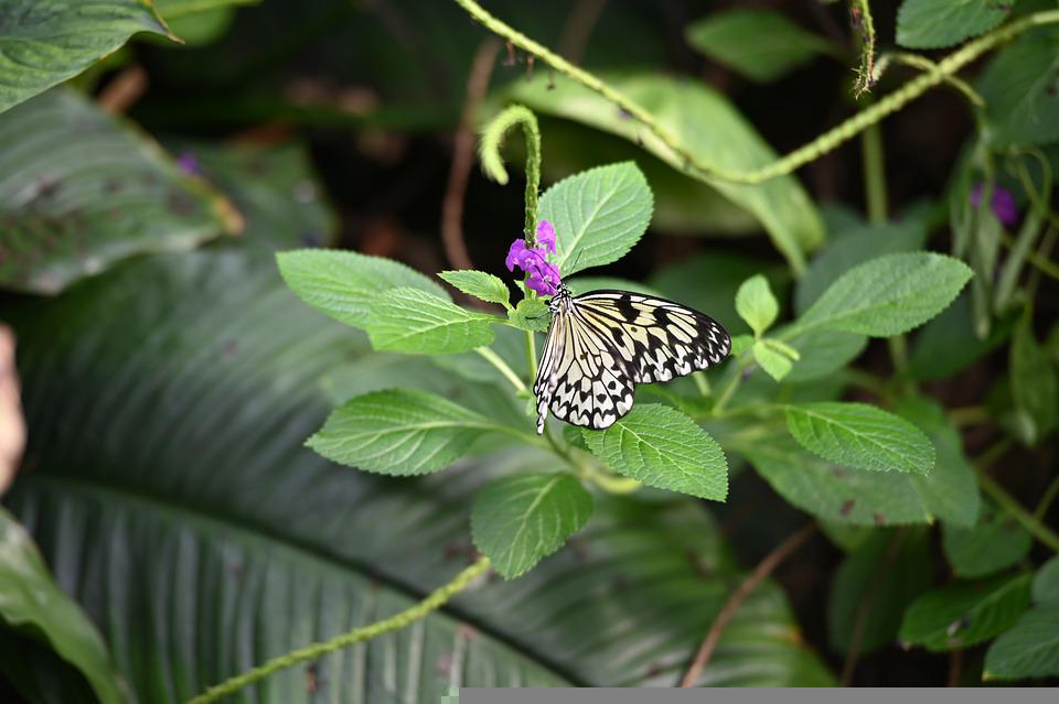 Butterfly, Flower, Leaves, Pollinate, Pollination