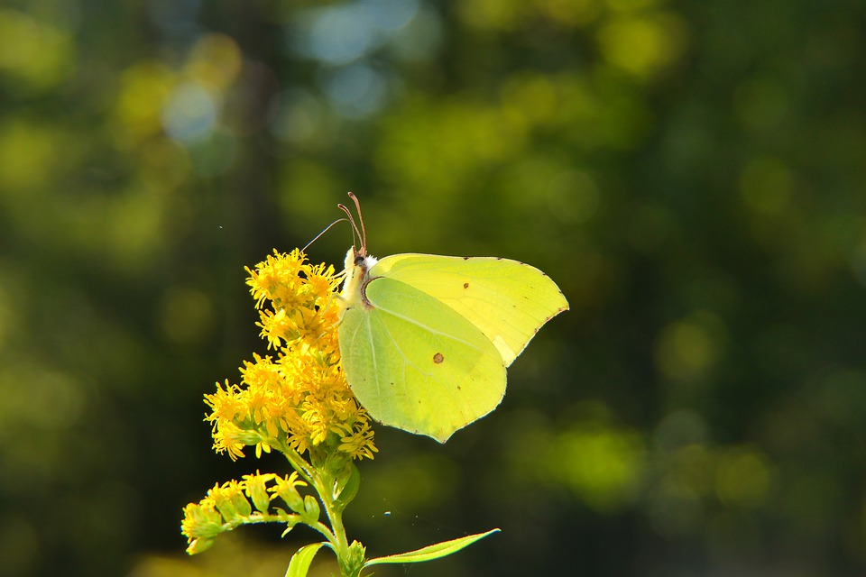 Butterfly, Pollinate, Butterfly Wings, Pollination