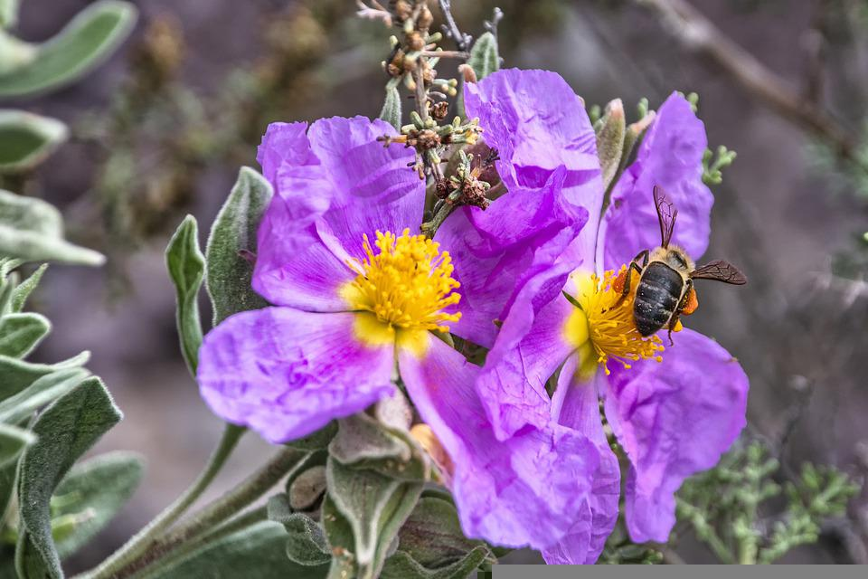 Flowers, Bee, Pollen, Pollinate, Pollination