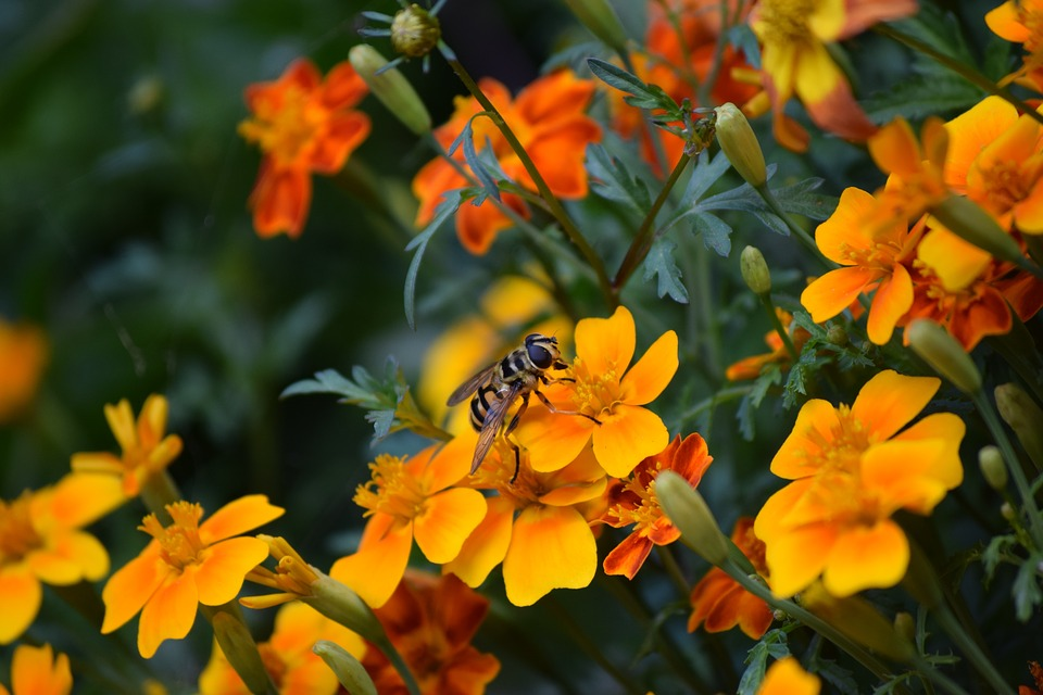 Bee, Flowers, Nature, Insect, Spring, Pollination