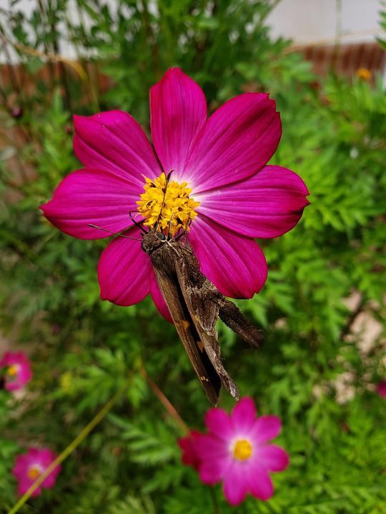 Moth, Flower, Pollinate, Pollination, Insect