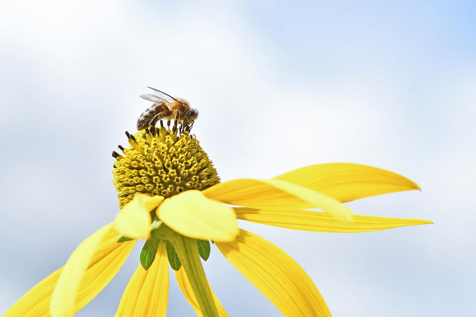 Bee, Insect, Pollen, Pollinate, Pollination