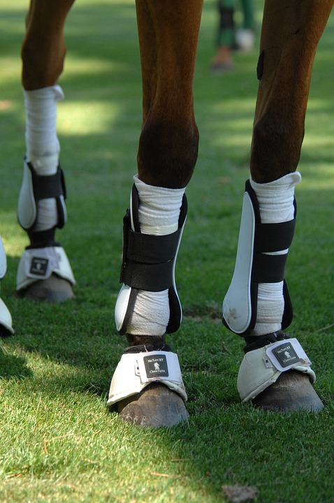 Horse, Legs, Polo, Sports, Protection, Macro, Close-up