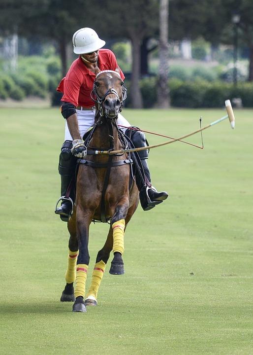 Polo, Sport, Horse, Game, Club, Polo Club, Player