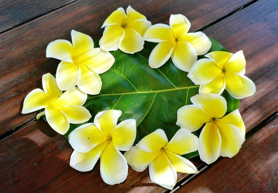 Plumeria, Flower, Polynesia
