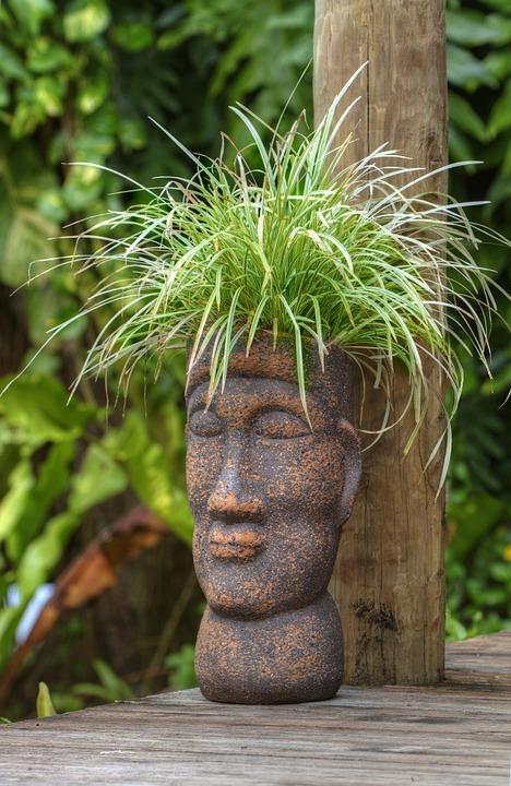 Pot Head, Polynesian, Plant, Garden, Tropical, Samoa