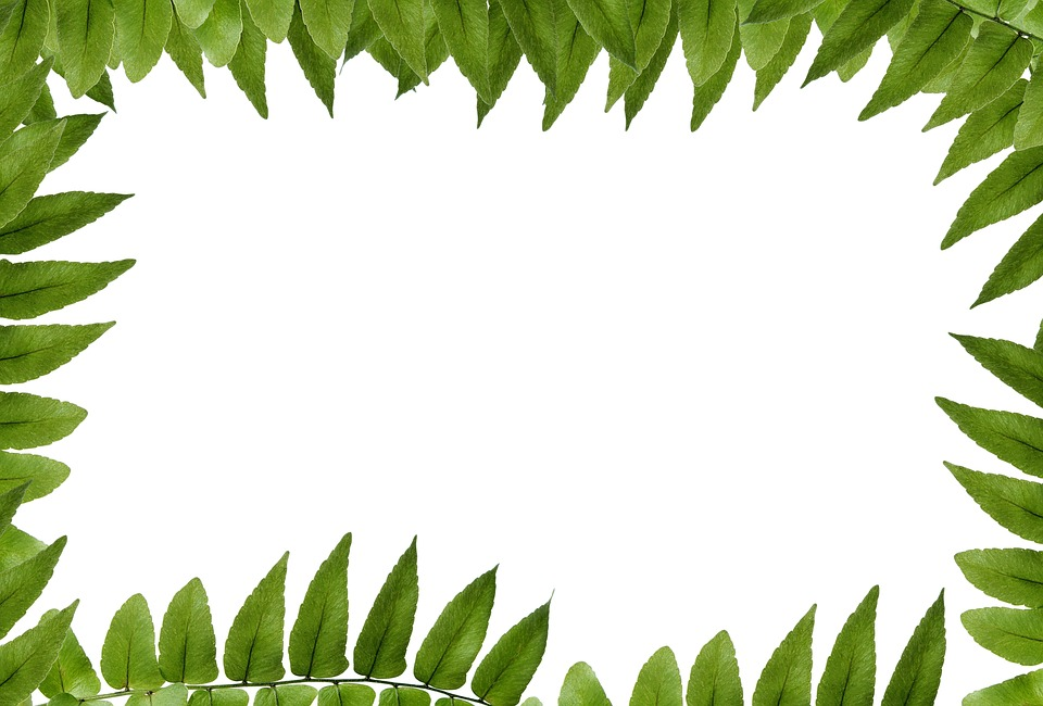 leaf green polypody frame picture frame ornament