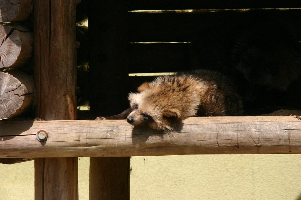Pom, Animal, Zoo, Sleep, Sleeping