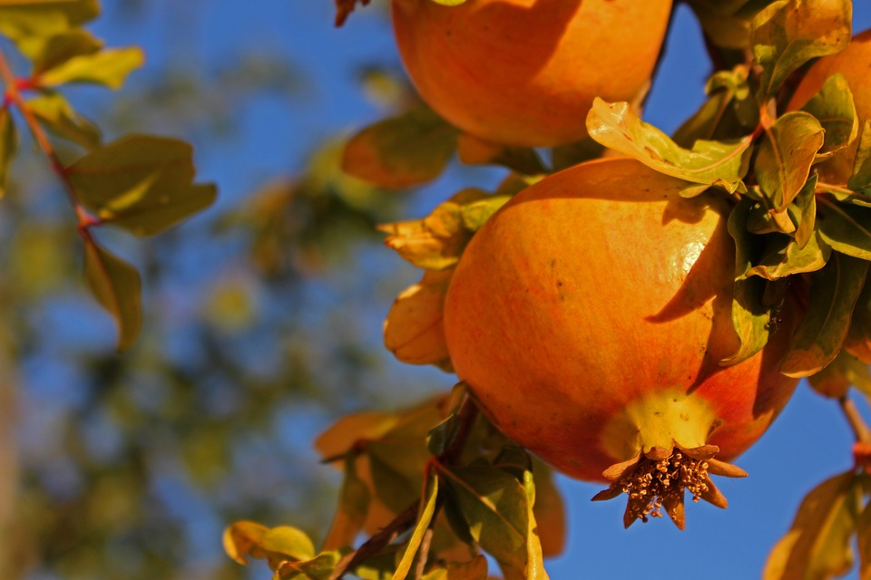 Pomegranate, Fruit, Fresh, Healthy, Vitamins, Nutrition