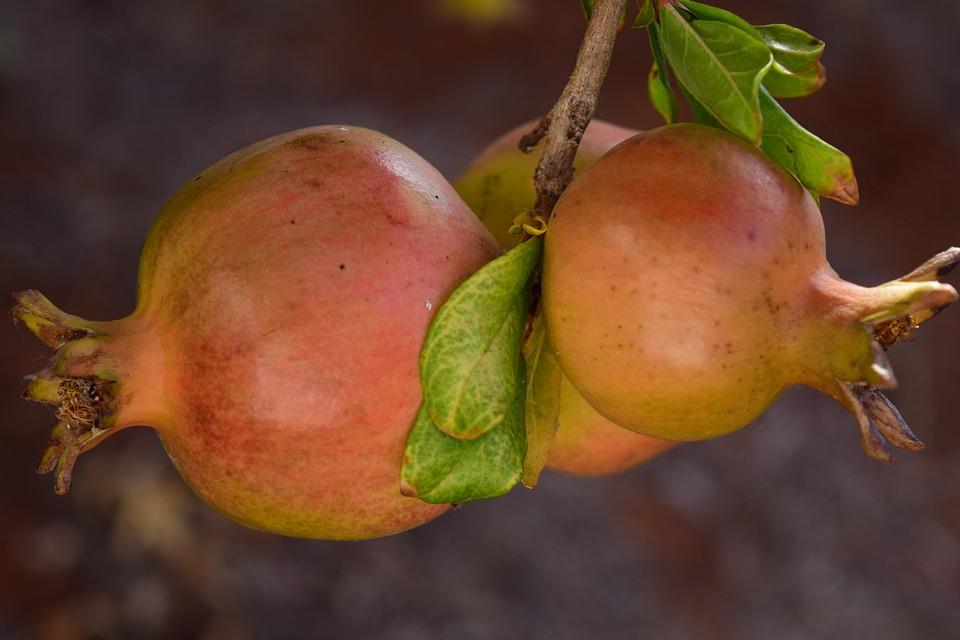 Pomegranate, Ripe, Pomegranate Tree, Mediterranean