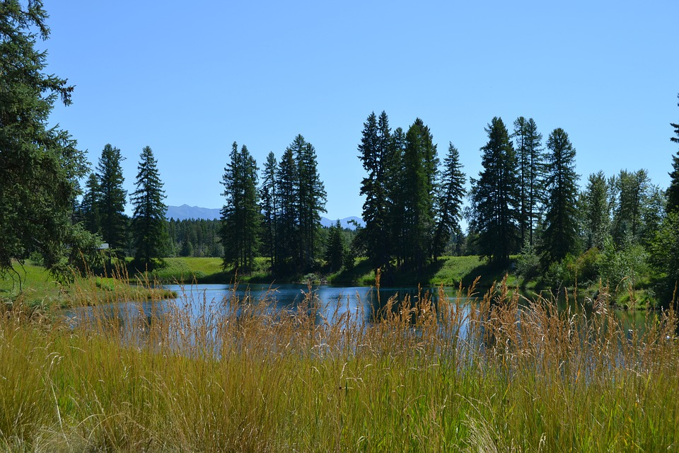 Pond, Lake, Water, Trees, Nature, Grass, Blue Sky